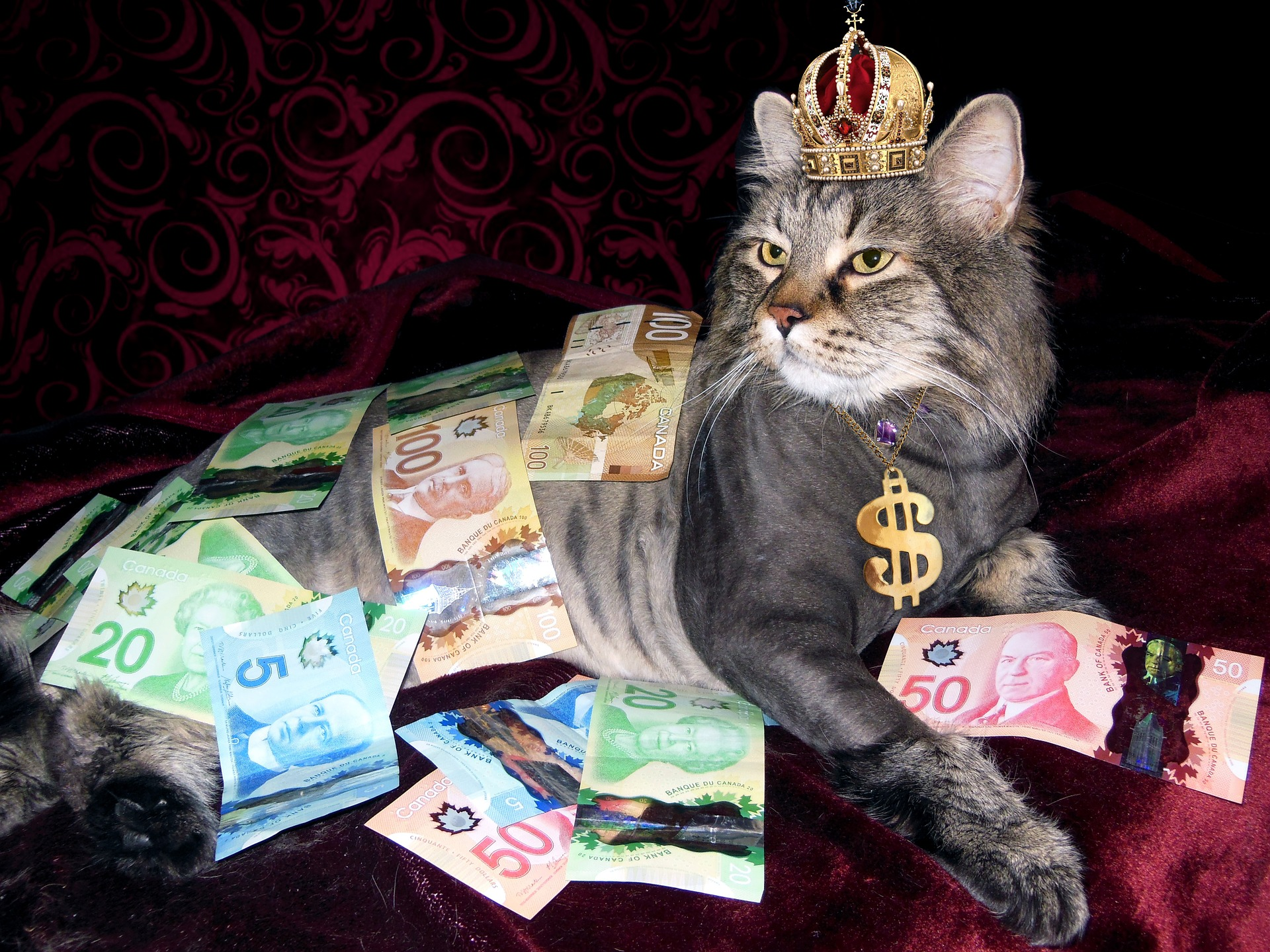 cat hoarding money - money grab